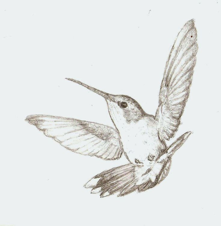 Sparrow Sketches | hummingbird sketch by colorado-sparrow