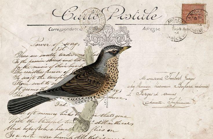 Kolaż z ptaszkiem