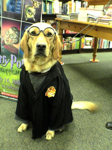 This dog-wizard wants you to buy some beautiful Harry Potter artwork from artinsights.com