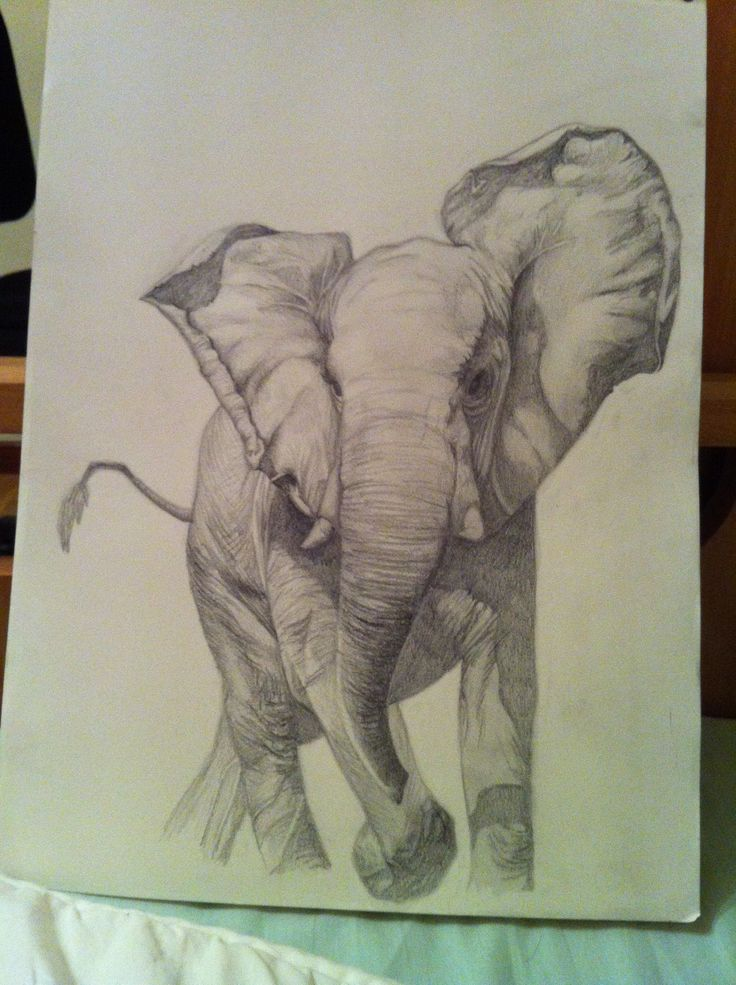 Elephant pencil illustration