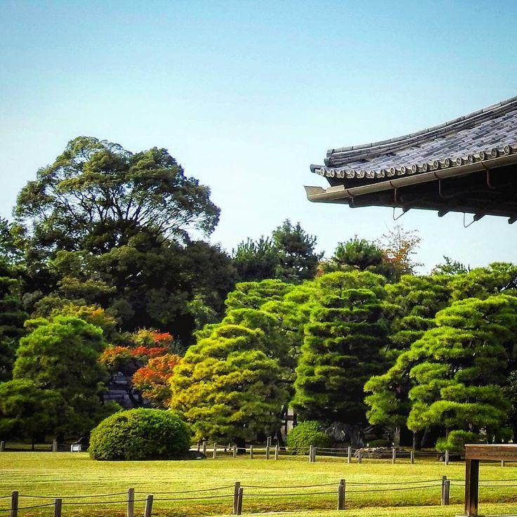 Jardins do Castelo Nijo em Quioto. O castelo foi construído em 1603 por Ieyasu Tokugawa, que se tornou xogun Tokugawa, que na prática governava o Japão apesar de haver o Imperador. Esse xogunato governou o Japão por 250 anos. Ieyadu passou a vida inteira em guerra com outros clãs até se tornar xogum e no Ocidente ficou famoso por expulsar os católicos e até executá-los no século 17 e fechar o Japão ao mundo até o século 19. #japao #japan #tokyo #japanese #japantravel #castle #viagem…