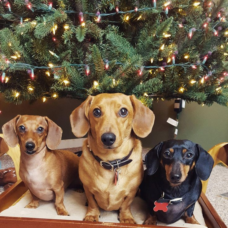 Where's our presents full of treats... we, we mean, what can we do for you? ♥