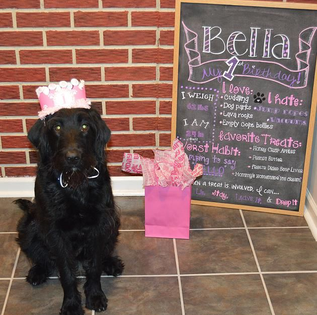laissezaffairs | The Newest Trend: Dog Birthday Parties labradoodle, birthday chalkboard