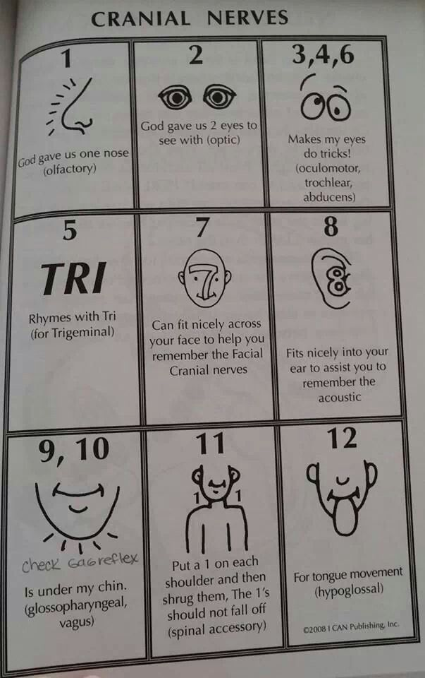 Helpful for remembering Cranial Nerves More