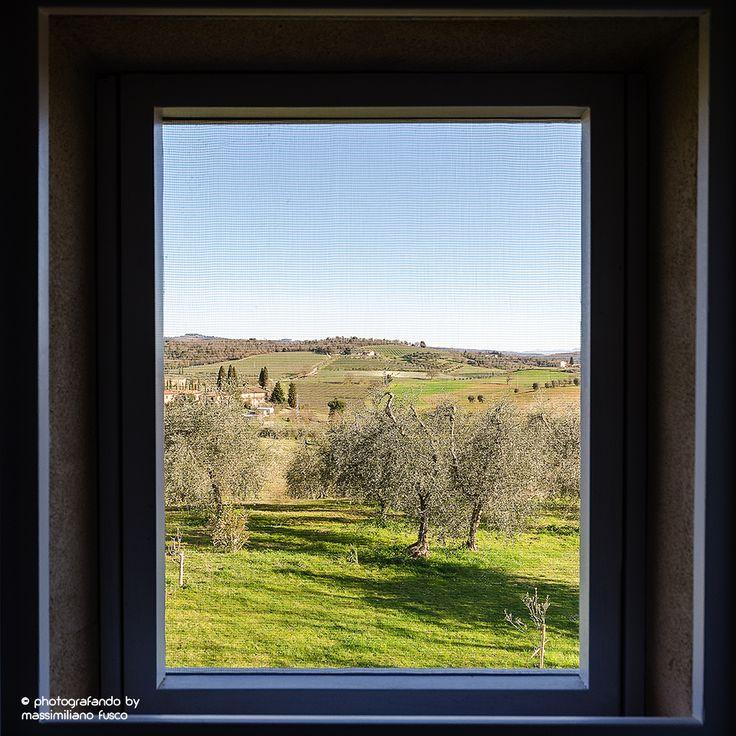 vista sugli ulivi da una delle finestre dell'agriturismo.
