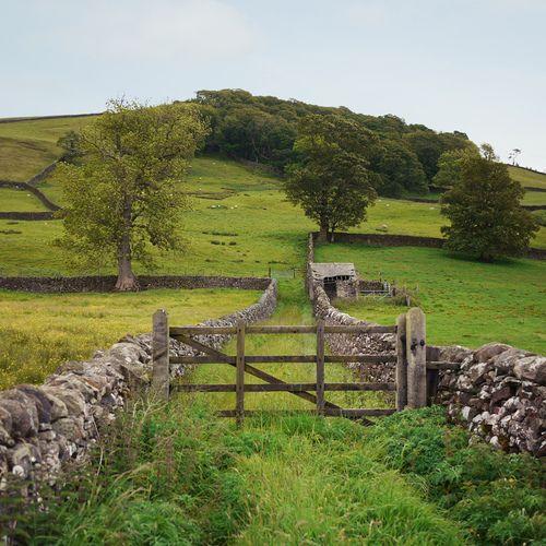 Stone Fence, Yorkshire, England photo via joye