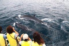 高知県でおすすめアクティビティーといえばホエールウォッチング クジラやマッコウクジラミンククジライワシクジラハナゴンドウバンドウイルカに出会うことができますよ ダイナミックな自然を肌で感じてみてください tags[高知県]