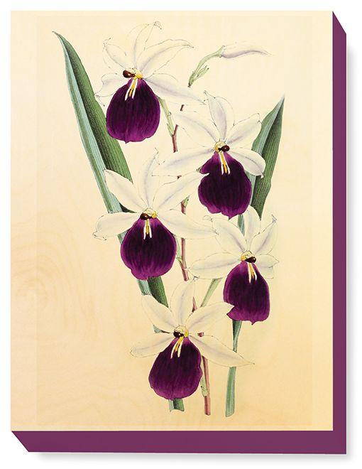 FLW 034 Vintage Flower