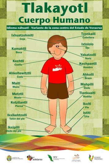 Partes del cuerpo en Náhuatl.