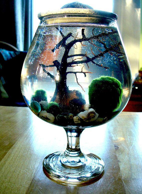 Best 25 Marimo Moss Ball Ideas On Pinterest Marimo