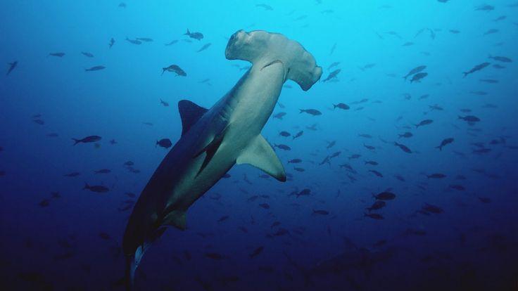 BANCO DE IMAGENES GRATIS: Viaje por el fondo del mar IV (Animales Acuáticos)