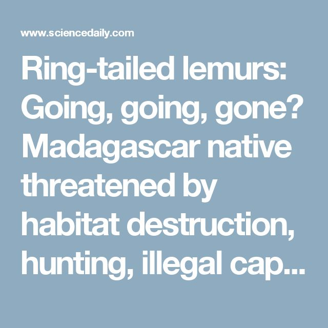 Ring-tailed lemurs: Going, going, gone? Madagascar native threatened by habitat destruction, hunting, illegal capture -- ScienceDaily