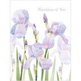 B035 Thinking of You Irises Gift Card. www.gailscards.com.au