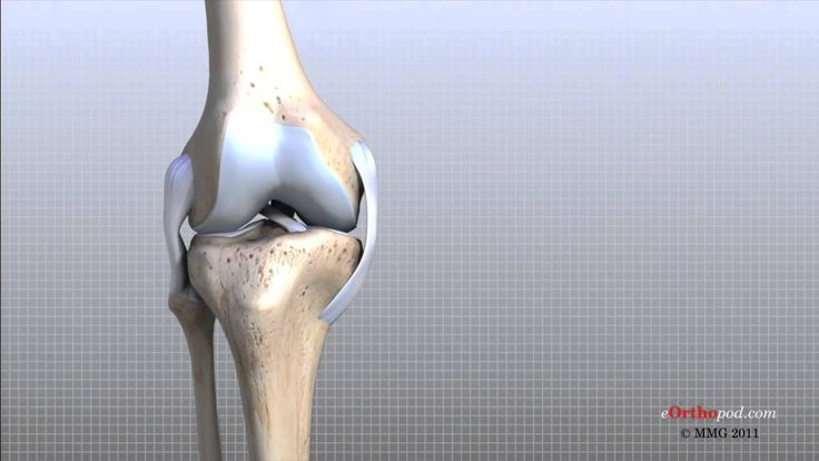 Sports Physiotherapy and Knee Anatomy