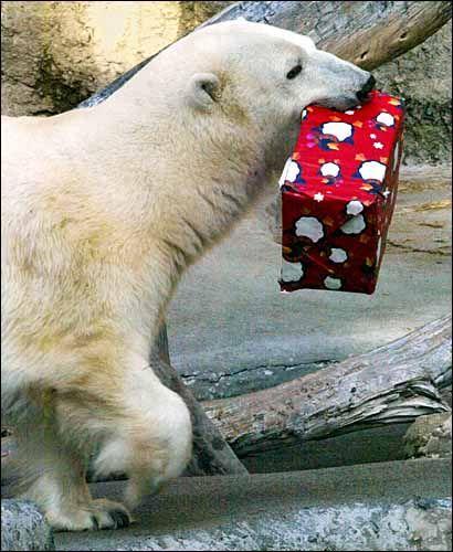 Polar Bear Christmas! @Melinda Steffen