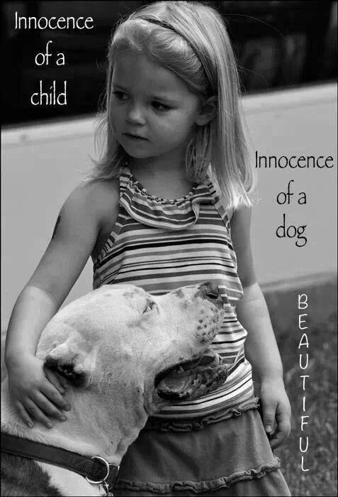 933 best Adorable Pit Bulls images on Pinterest | Pit bull ...