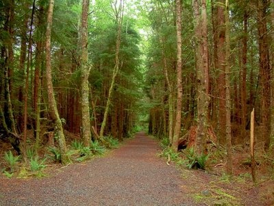 forks, washington.: Washington State, Forks Washington And, Someday Forks La Push Etc, Road Trips, Visit Forks, Twilight Forks Washington, Beautiful Roads, Things, Photography
