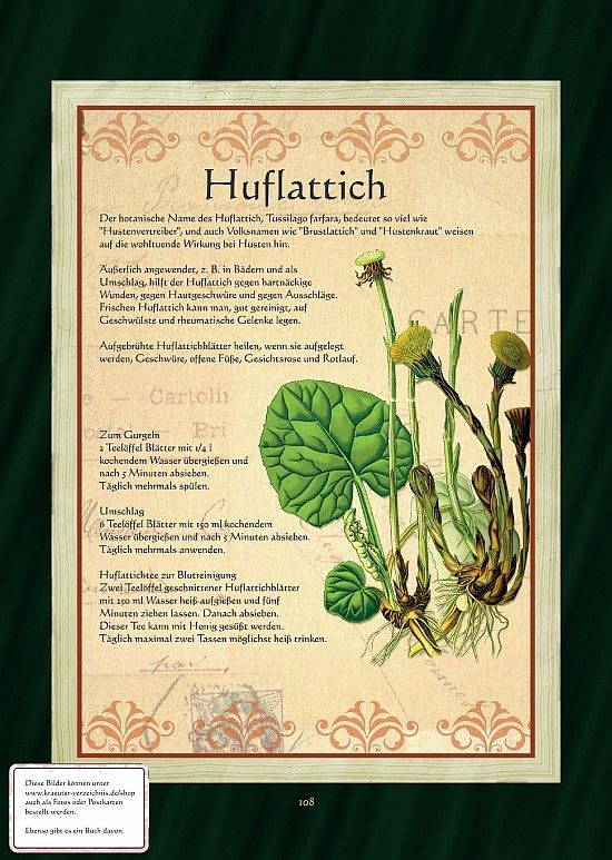 Huflattich - Huflattichtee