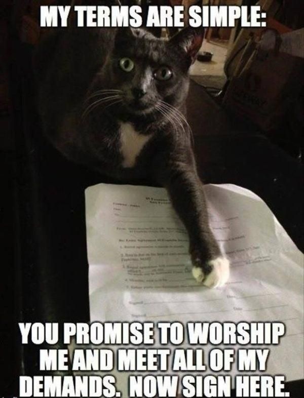 Cat Meme Of The Decade Cat Memes Cat Quotes Funny Funny Animal Pictures