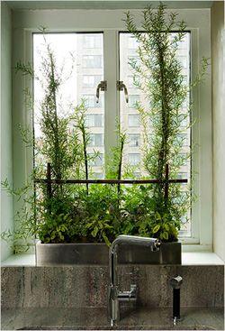 Indoor Gardening in 5 Steps Kitchen herbsIndoor