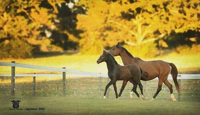 """golden hour photography   Golden hour"""""""