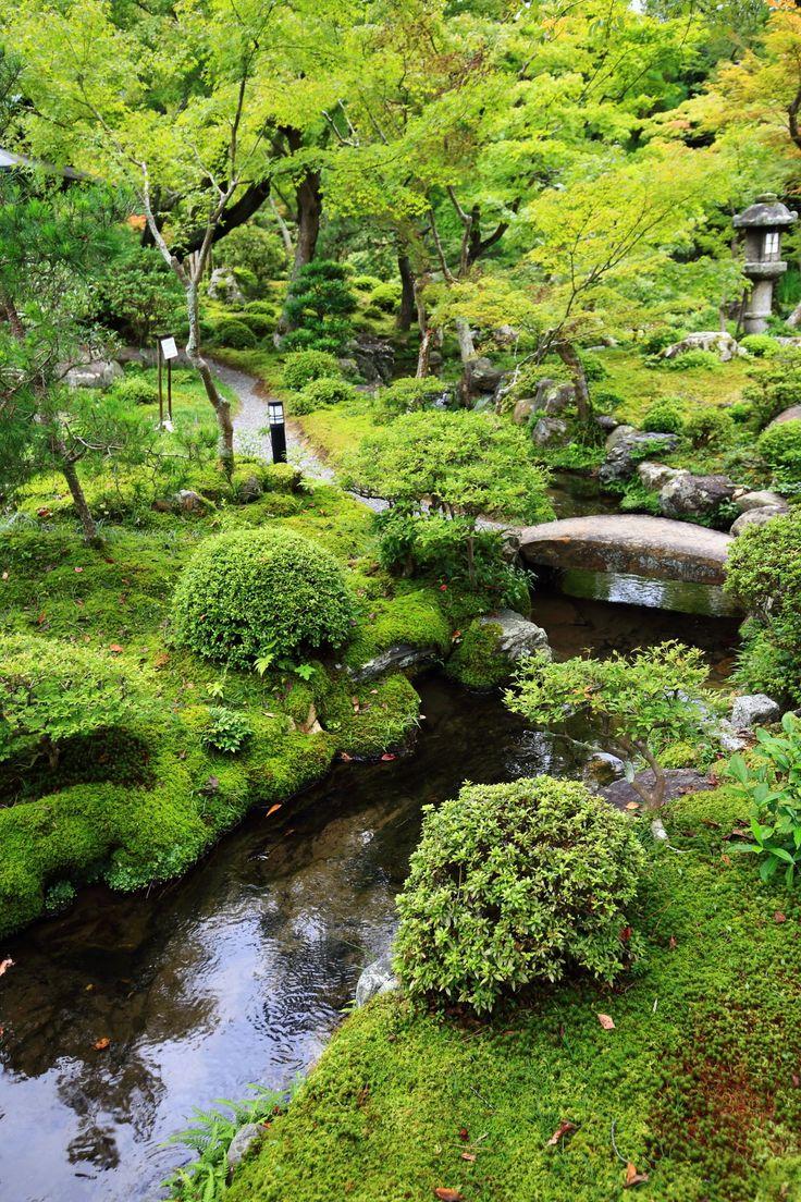 京都南禅寺大寧軒の池と苔と青もみじ