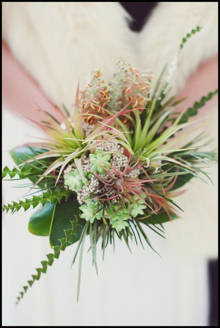 Look at the shades of color that air plants come in!