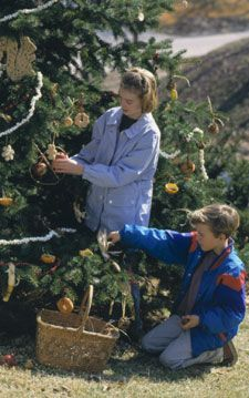 Trees provide shelter and now food for the Birds. Make and hang orange cups, bread cookies and stuffed pine cones to feed birds in winter. Perfect!