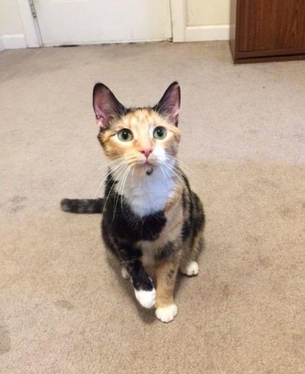 Кошка пришла к людям за помощью