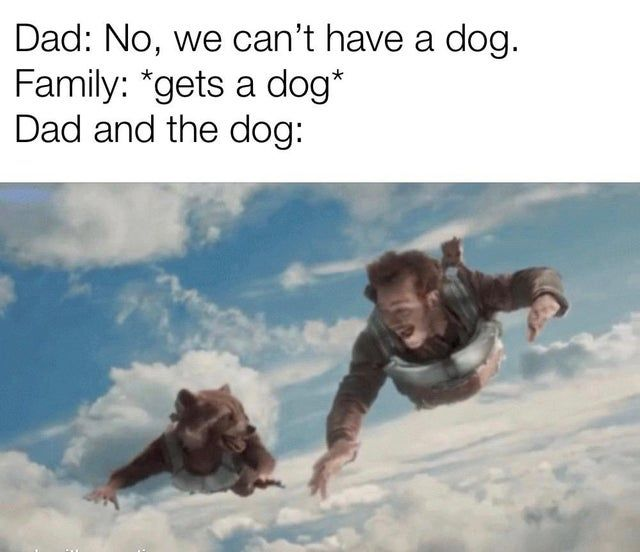 Dad And The Dog Memes For Dads Who Didn T Want Dogs Funny Dog Memes Funny Memes Dad Humor