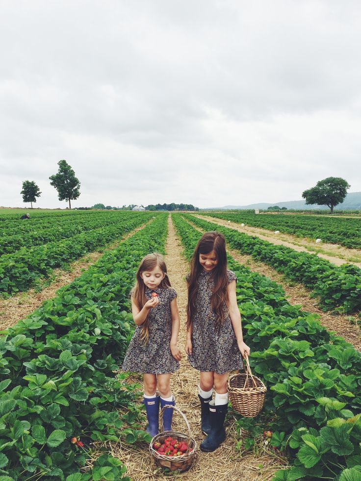 how this brings back all the memories of my sister and I as little girls picking strawberries! how fast the time has flown...