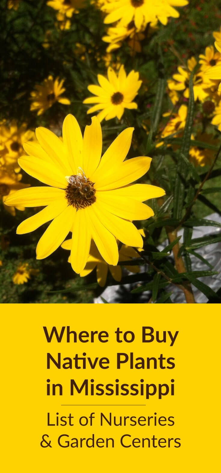 Where To Buy Native Plants in Mississippi: Plant nurseries, landscaping companies, and garden centers in Mississippi that sell native plants. Directory includes retail and wholesale. via @gardenexperimnt