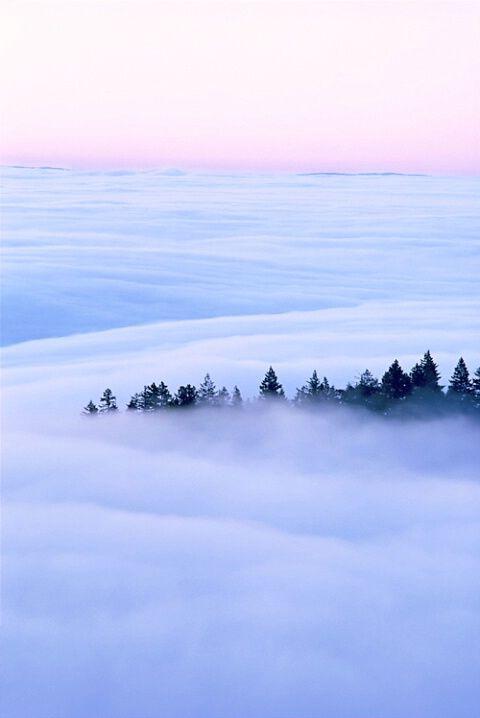 Fog over Muir Woods, CA