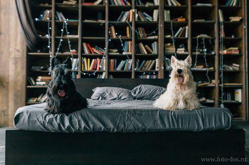 Съемка с собаками семейная