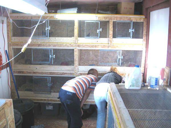 17 best images about breeding quail on pinterest poultry for Quail housing plans