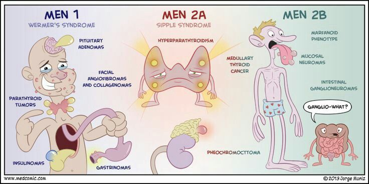 "Multiple endocrine neoplasia (MEN) syndromes are inherited autosomal dominant disorders characterized by the growth of benign or malignant tumors involving several endocrine glands ....(Note: all ""neuromas"" in MEN 2B)"