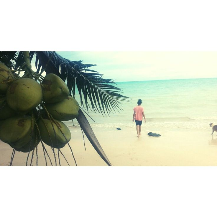 Enjoying life to the fullest! X  #samoa #beach #ocean #coconuttree #tree #coconut #dog #sky #niu #palmtree #me #view #pacific #pacificislands #oceania #pacificocean #photography #photo #pic #image