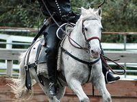 1000+ images about Tiro Con Arco Tradicional on Pinterest | Bows, Recurve bows and Shooting