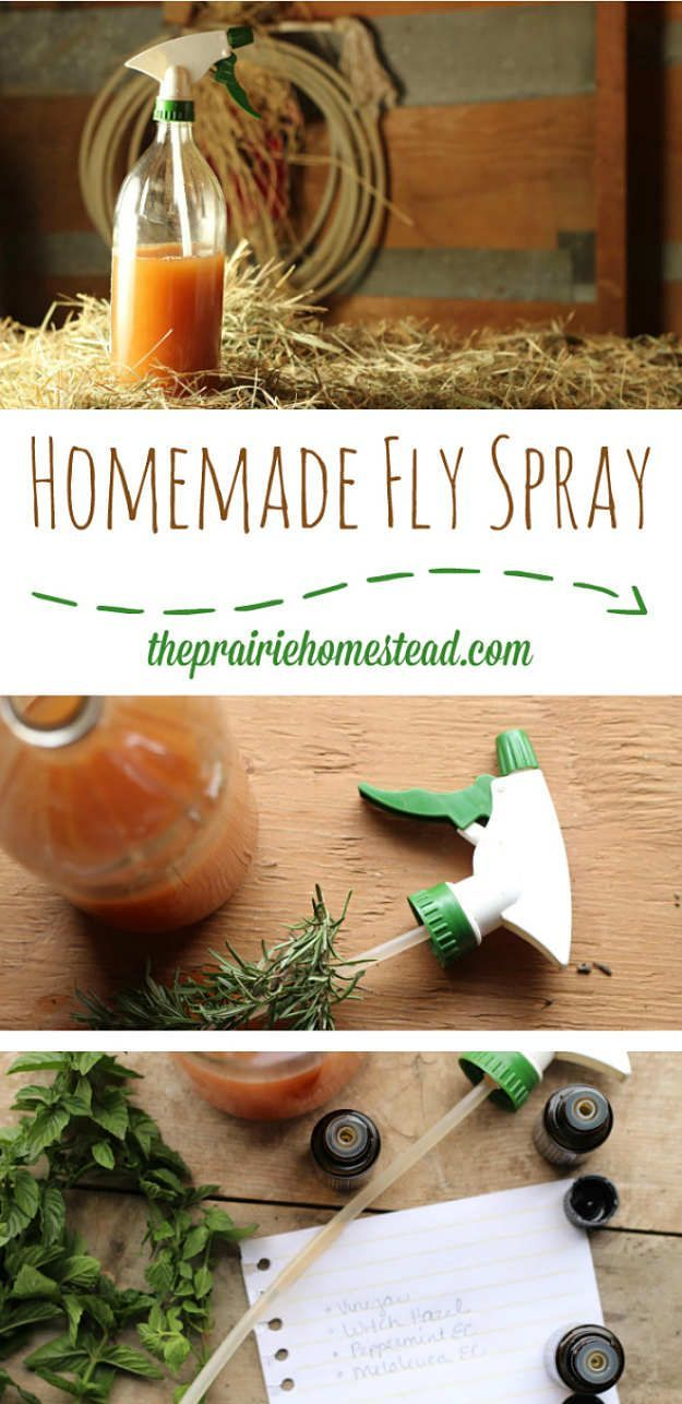 Homemade Fly Spray Recipe | How To Get Rid Of Flies | Natural And Homemade Fly Repellents