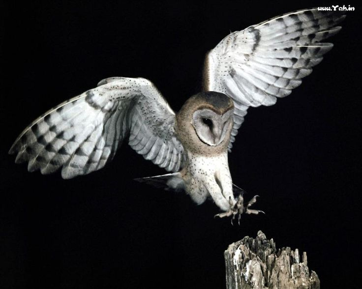 Owls are incredible animals!