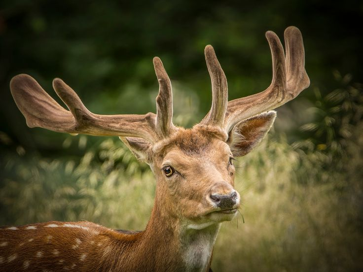 Oh dear - A true beauty amongst animals