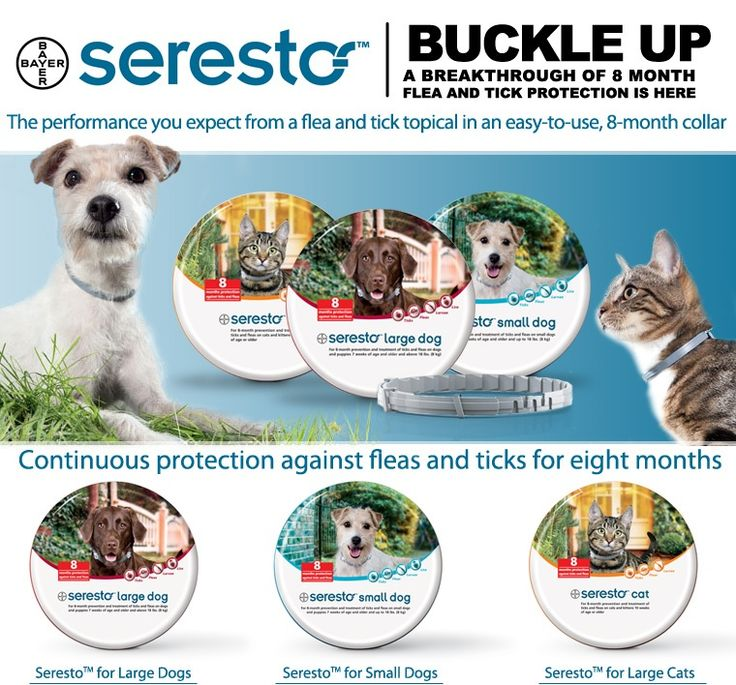 Seresto collar 8 months of protection