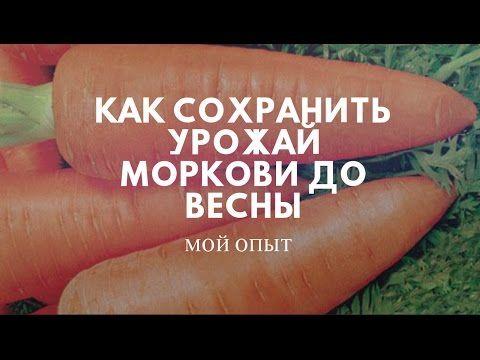 СУПЕР СПОСОБ ХРАНЕНИЯ МОРКОВИ И СВЕКЛЫ! - YouTube