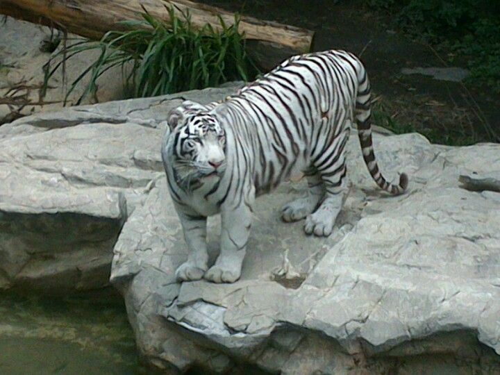 Zoológico de Chapultepec en Miguel Hidalgo, Federal District
