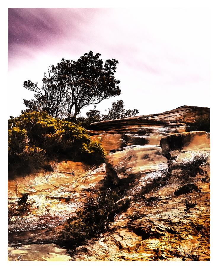 Cliffside Vegetation III by mdomaradzki.deviantart.com on @deviantART