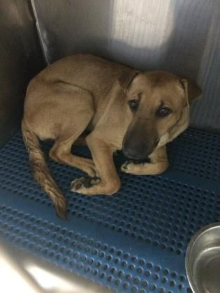 Dogs To Adopt In El Paso Tx