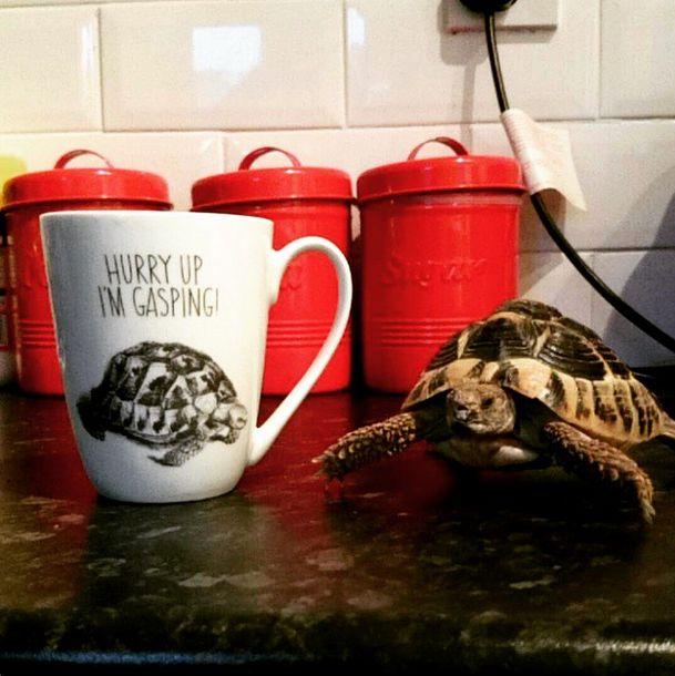 Terry the tortoise loves our mug!