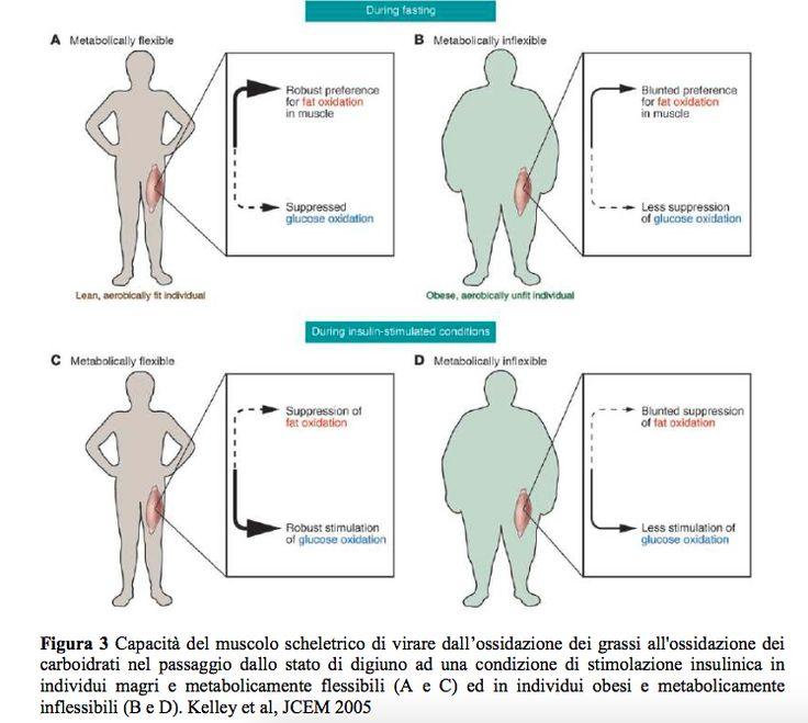 Flessibilità metabolica: perchè è fondamentale per essere magri