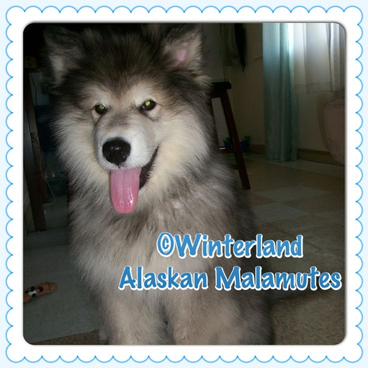 Best Dog Beds For Alaskan Malamutes