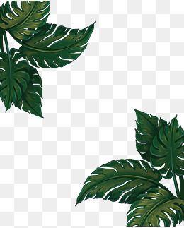 Green Leaf Png Vector | Jidileaf co